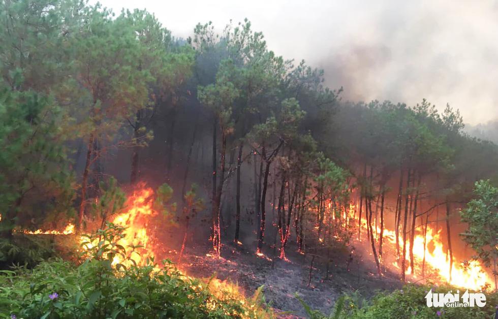 Lại cháy rừng dữ dội trong nắng nóng - Ảnh 1.