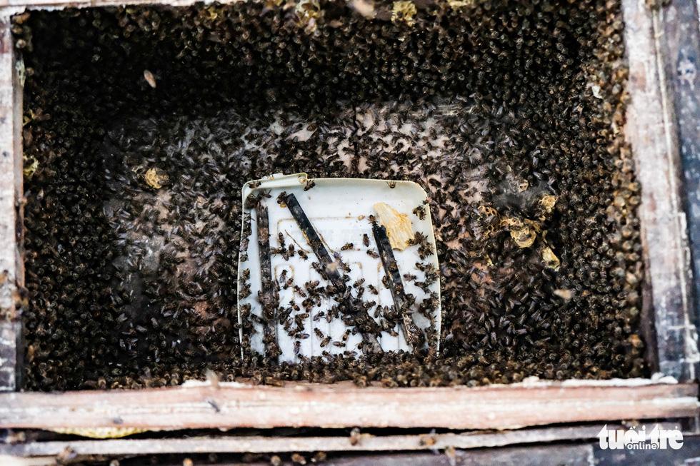 Một ngày theo chân gia đình gần 30 năm nuôi ong lấy mật - Ảnh 7.