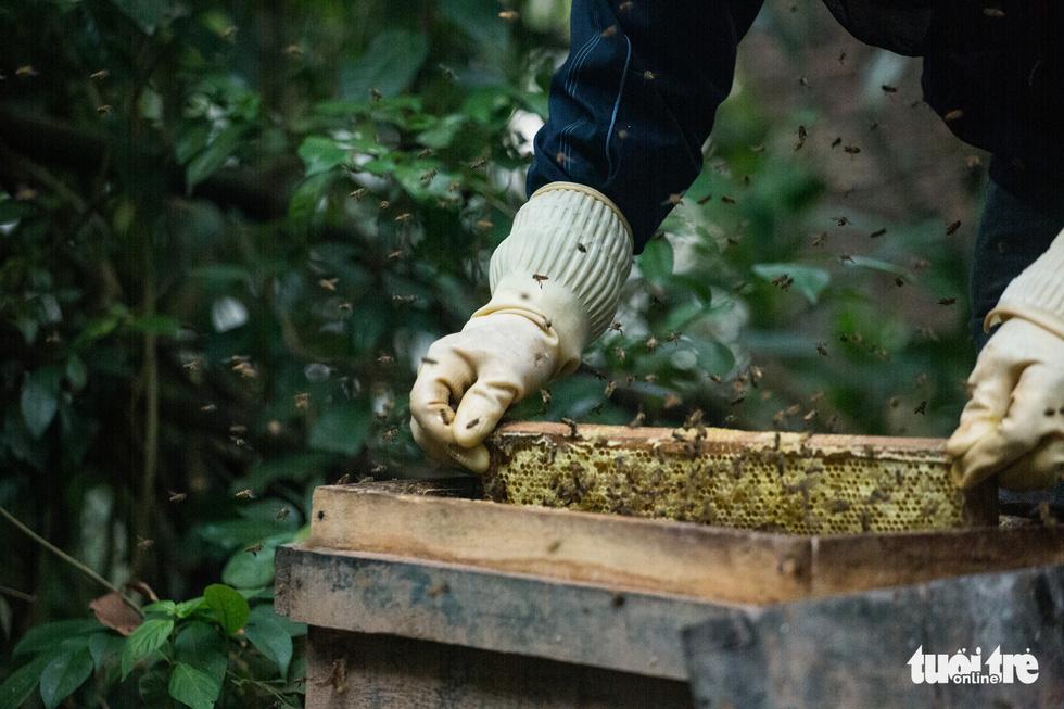 Một ngày theo chân gia đình gần 30 năm nuôi ong lấy mật - Ảnh 4.