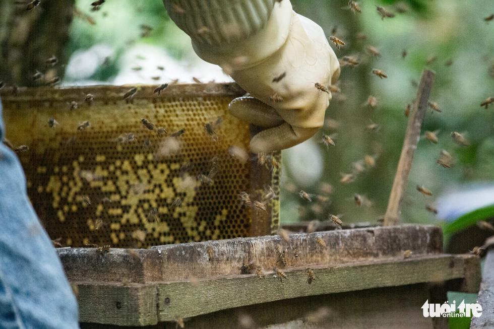 Một ngày theo chân gia đình gần 30 năm nuôi ong lấy mật - Ảnh 5.