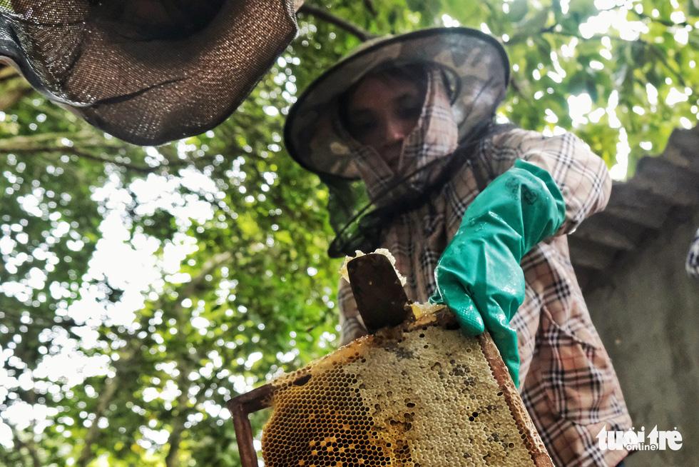 Một ngày theo chân gia đình gần 30 năm nuôi ong lấy mật - Ảnh 8.