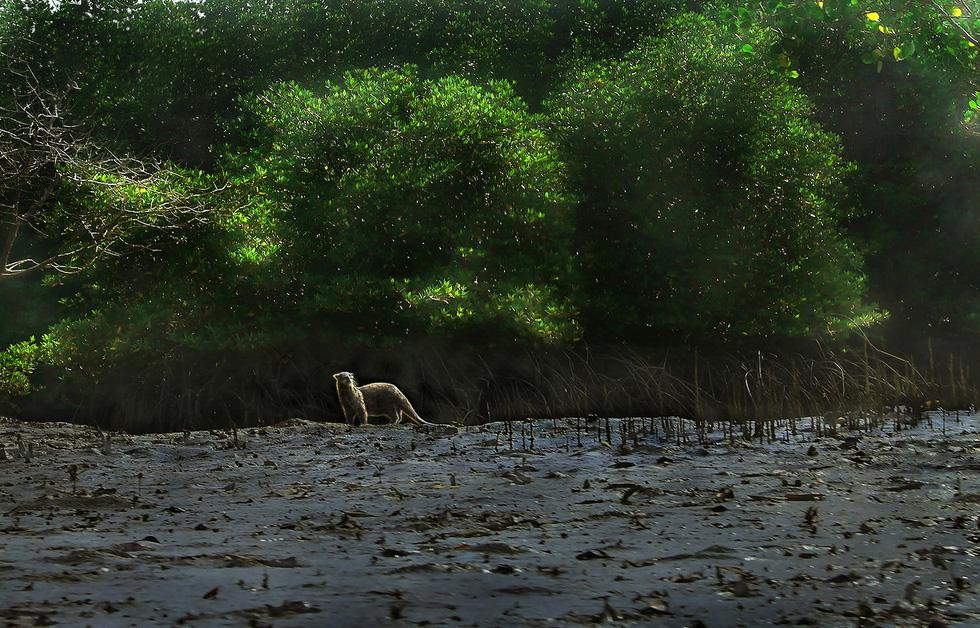 Khoảnh khắc cô gái chặt dừa nước đoạt giải nhất ảnh Cần Giờ - Ảnh 6.