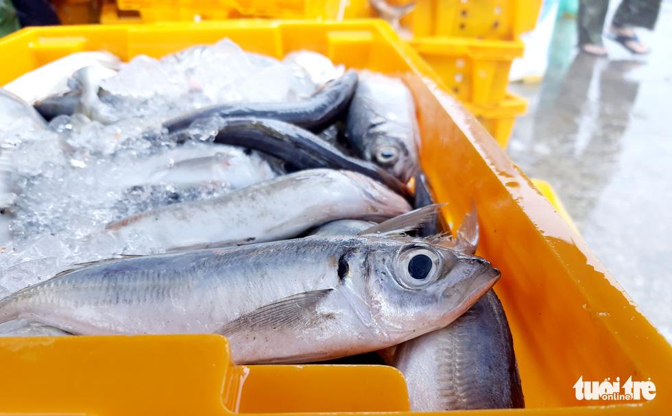 Ngư dân hối hả đưa hải sản vào bờ tránh bão số 2 - Ảnh 7.