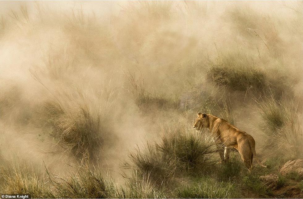 Mùa dịch ở nhà và ngắm thế giới tươi đẹp qua ống kính National Geographic Traveller - Ảnh 3.