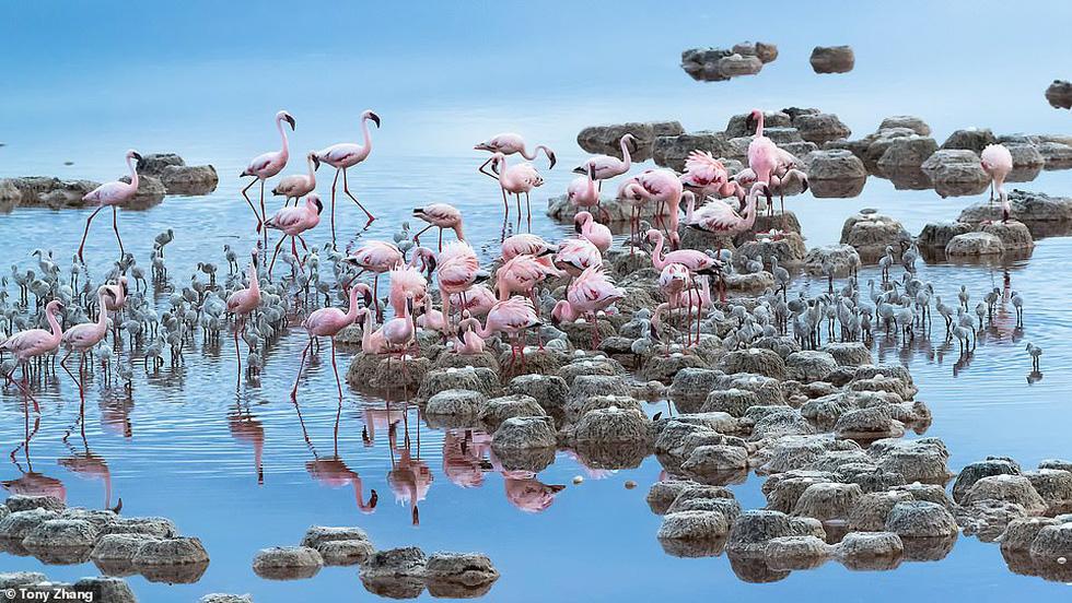 Mùa dịch ở nhà và ngắm thế giới tươi đẹp qua ống kính National Geographic Traveller - Ảnh 6.