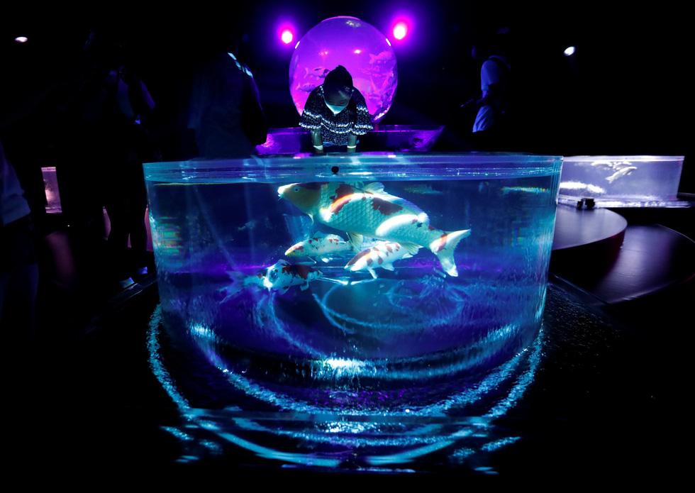 Thế giới lung linh như mộng ảo của cá cảnh Nhật - Ảnh 4.