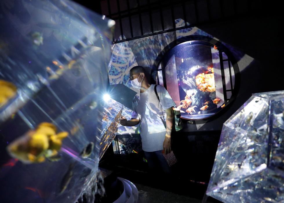 Thế giới lung linh như mộng ảo của cá cảnh Nhật - Ảnh 5.