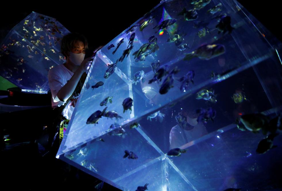 Thế giới lung linh như mộng ảo của cá cảnh Nhật - Ảnh 9.