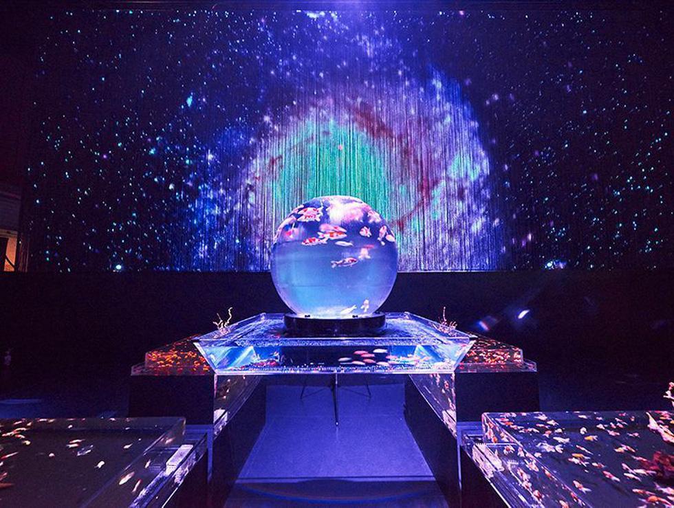 Thế giới lung linh như mộng ảo của cá cảnh Nhật - Ảnh 1.