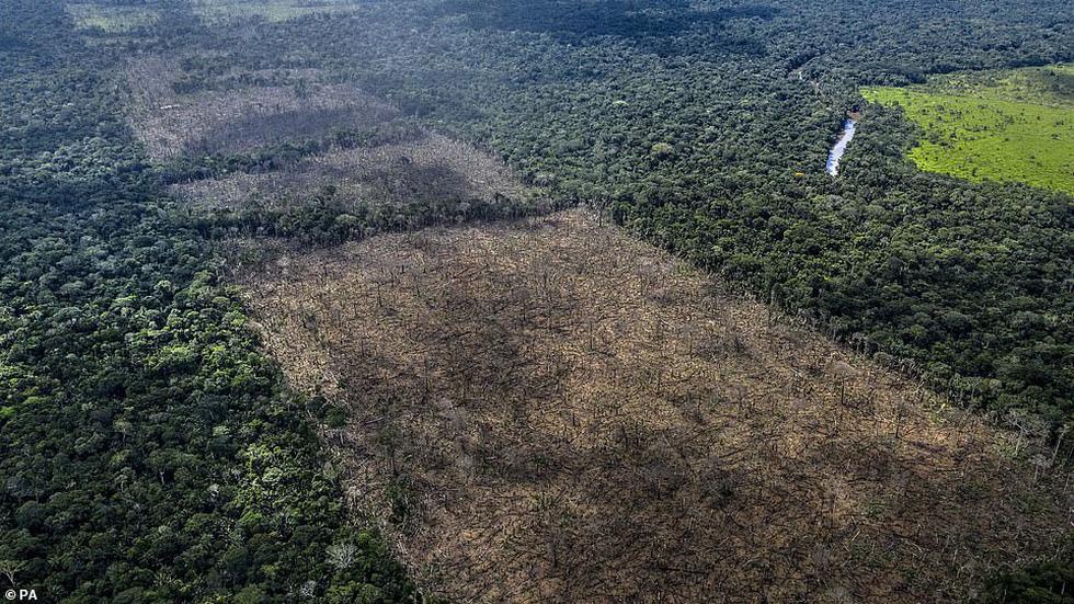 Thiên nhiên đang 'rơi tự do' vì lối sống của loài người - Ảnh 1.