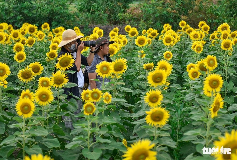 Thỏa thích tung tẩy giữa cánh đồng hoa rực rỡ tại quận 9 - Ảnh 2.