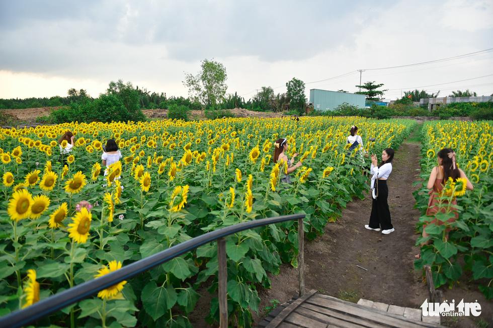 Thỏa thích tung tẩy giữa cánh đồng hoa rực rỡ tại quận 9 - Ảnh 3.
