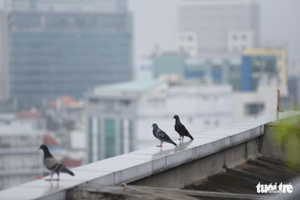 TP.HCM trời mù mịt từ sáng sớm, mưa lất phất như Tết Hà Nội - Ảnh 4.