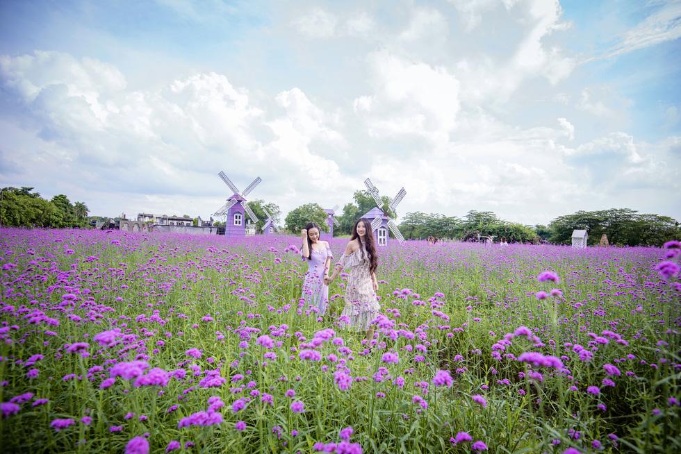 Cánh đồng hoa oải hương thảo đầu tiên tại Hà Nội hút hồn du khách - Ảnh 5.