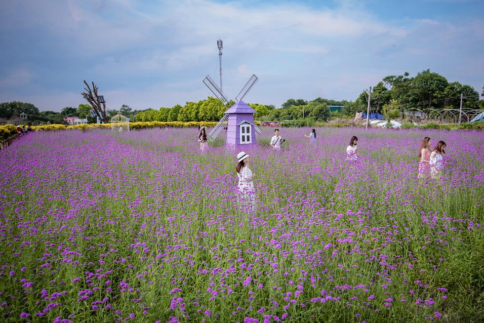 Cánh đồng hoa oải hương thảo đầu tiên tại Hà Nội hút hồn du khách - Ảnh 1.