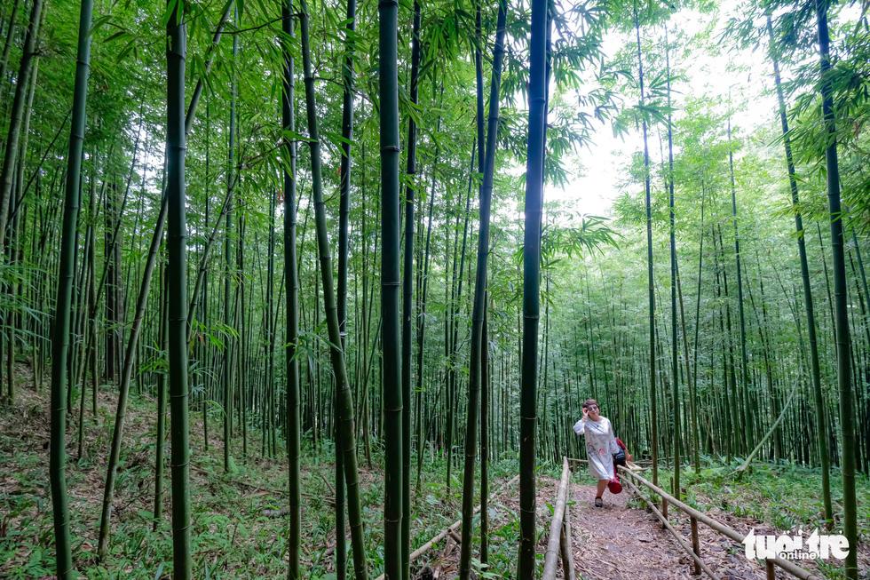 Lạc vào rừng trúc Mù Cang Chải đẹp như phim kiếm hiệp - Ảnh 8.