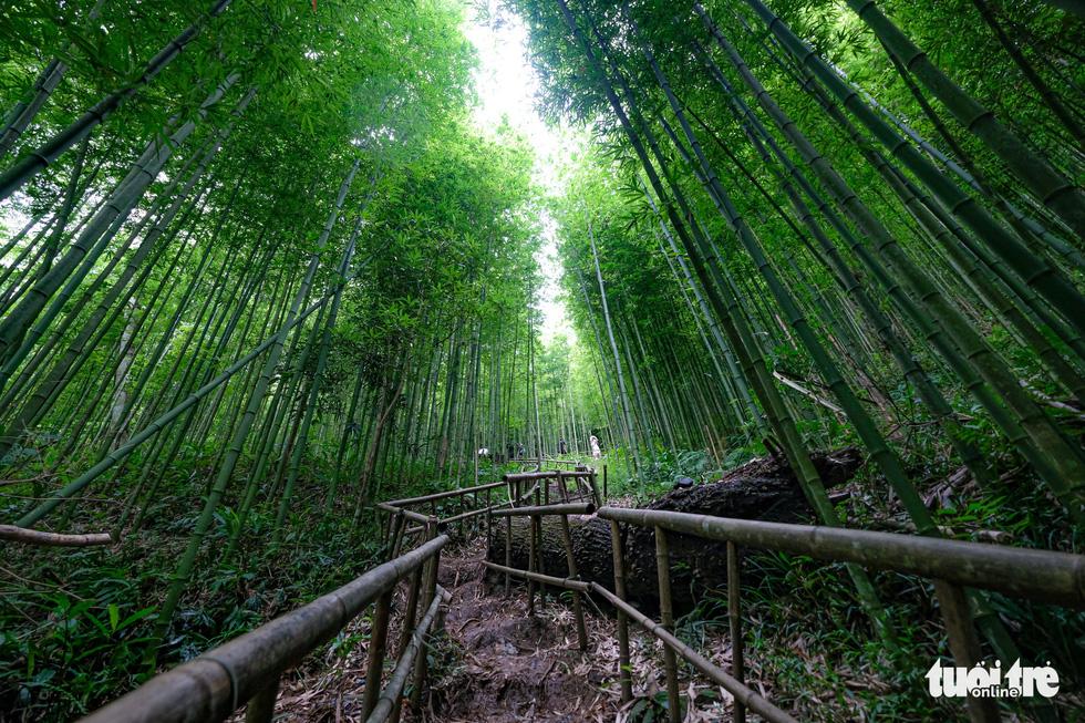 Lạc vào rừng trúc Mù Cang Chải đẹp như phim kiếm hiệp - Ảnh 1.