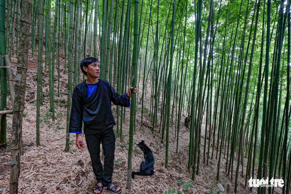 Lạc vào rừng trúc Mù Cang Chải đẹp như phim kiếm hiệp - Ảnh 2.