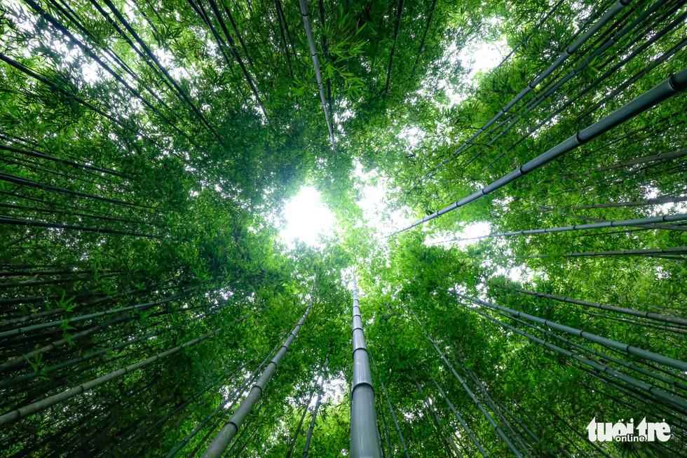 Lạc vào rừng trúc Mù Cang Chải đẹp như phim kiếm hiệp - Ảnh 9.