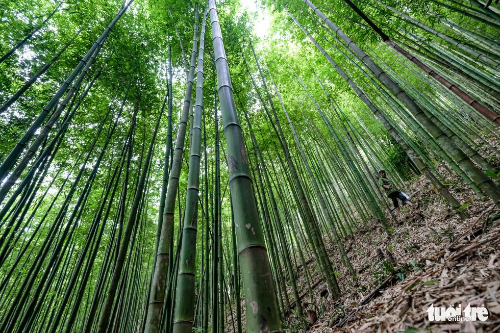 Lạc vào rừng trúc Mù Cang Chải đẹp như phim kiếm hiệp - Ảnh 7.