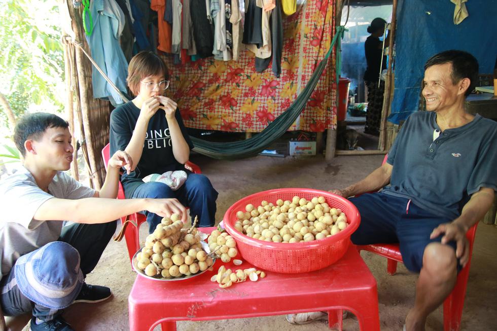 Mùa thu hoạch bòn bon ăn hoài mệt nghỉ ở xứ Quảng - Ảnh 2.