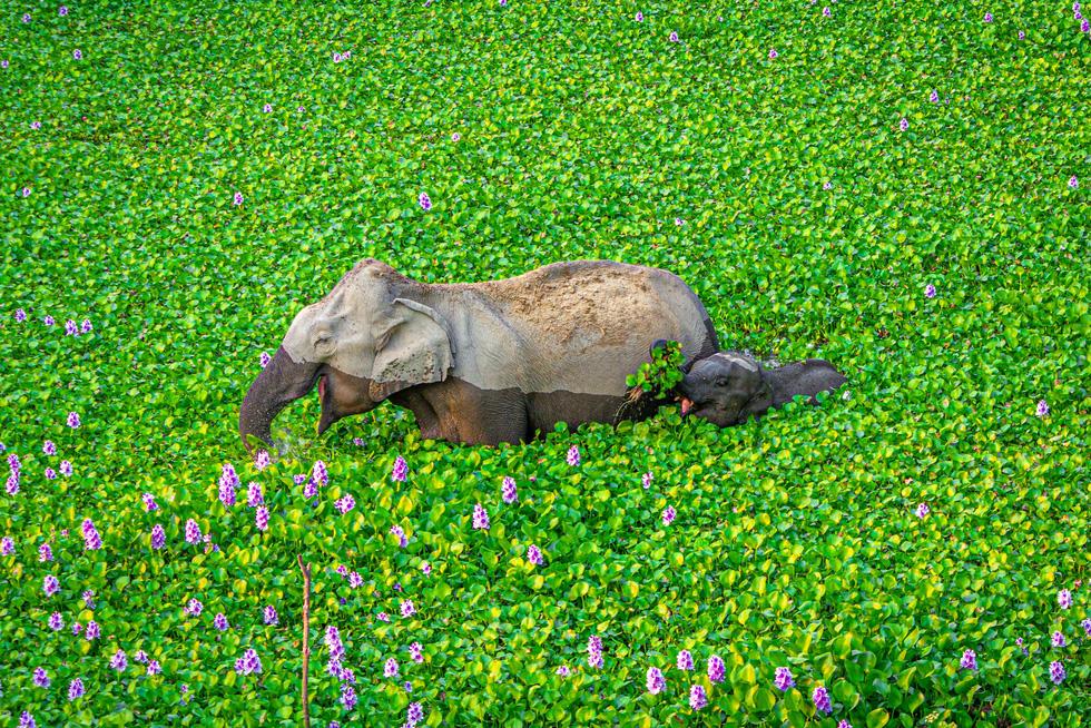 Ảnh động vật vui nhộn: Sư tử tám chuyện, mẹ con voi cười tít mắt giữa đầm hoa - Ảnh 1.