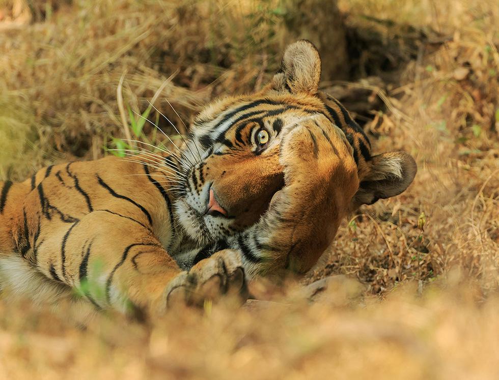 Ảnh động vật vui nhộn: Sư tử tám chuyện, mẹ con voi cười tít mắt giữa đầm hoa - Ảnh 5.