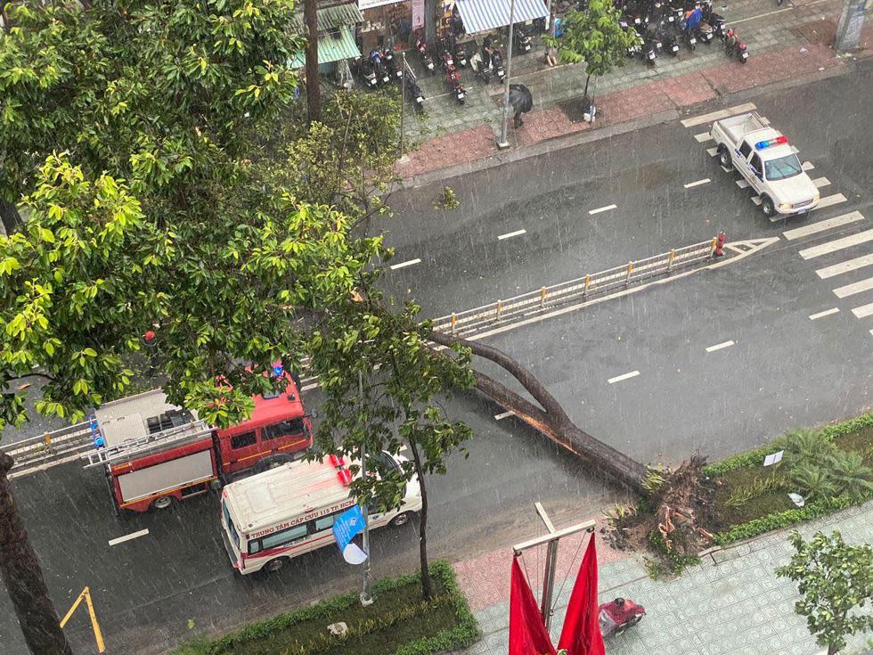 Cây bật gốc đổ ngang đường Nguyễn Tri Phương làm 1 người bị thương, ngập và kẹt xe nhiều nơi - Ảnh 3.