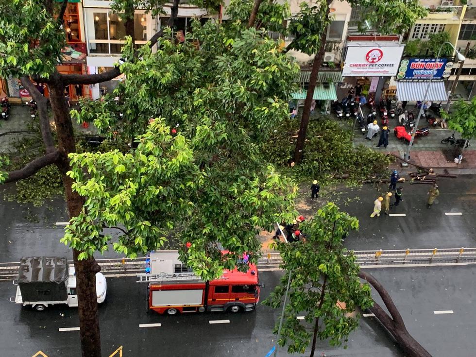 Cây bật gốc đổ ngang đường Nguyễn Tri Phương làm 1 người bị thương, ngập và kẹt xe nhiều nơi - Ảnh 5.