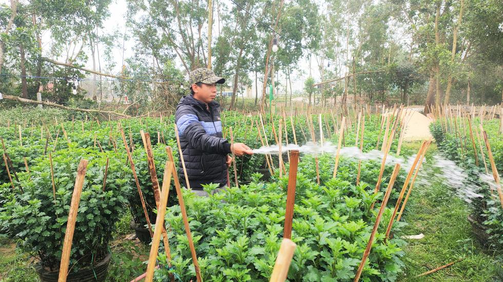 Người trồng hoa tết ở Quảng Nam phấn khởi vì được mùa, được giá - Ảnh 4.