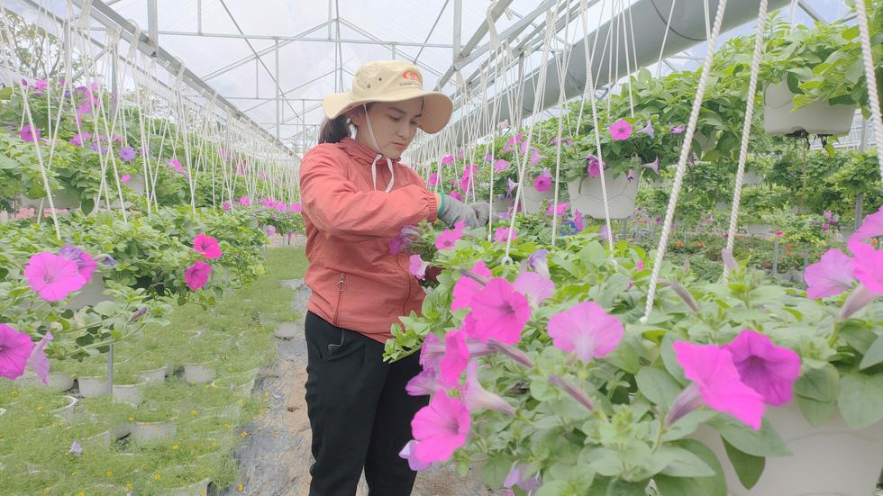 Người trồng hoa tết ở Quảng Nam phấn khởi vì được mùa, được giá - Ảnh 3.