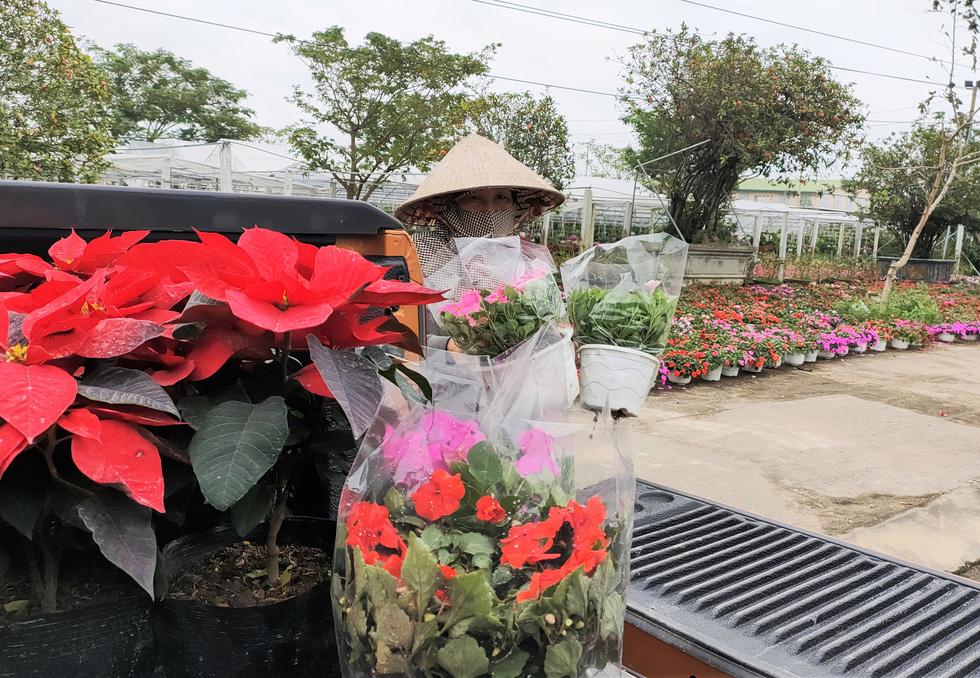 Người trồng hoa tết ở Quảng Nam phấn khởi vì được mùa, được giá - Ảnh 7.