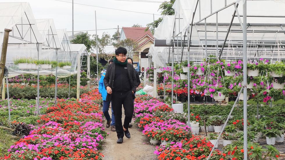 Người trồng hoa tết ở Quảng Nam phấn khởi vì được mùa, được giá - Ảnh 8.