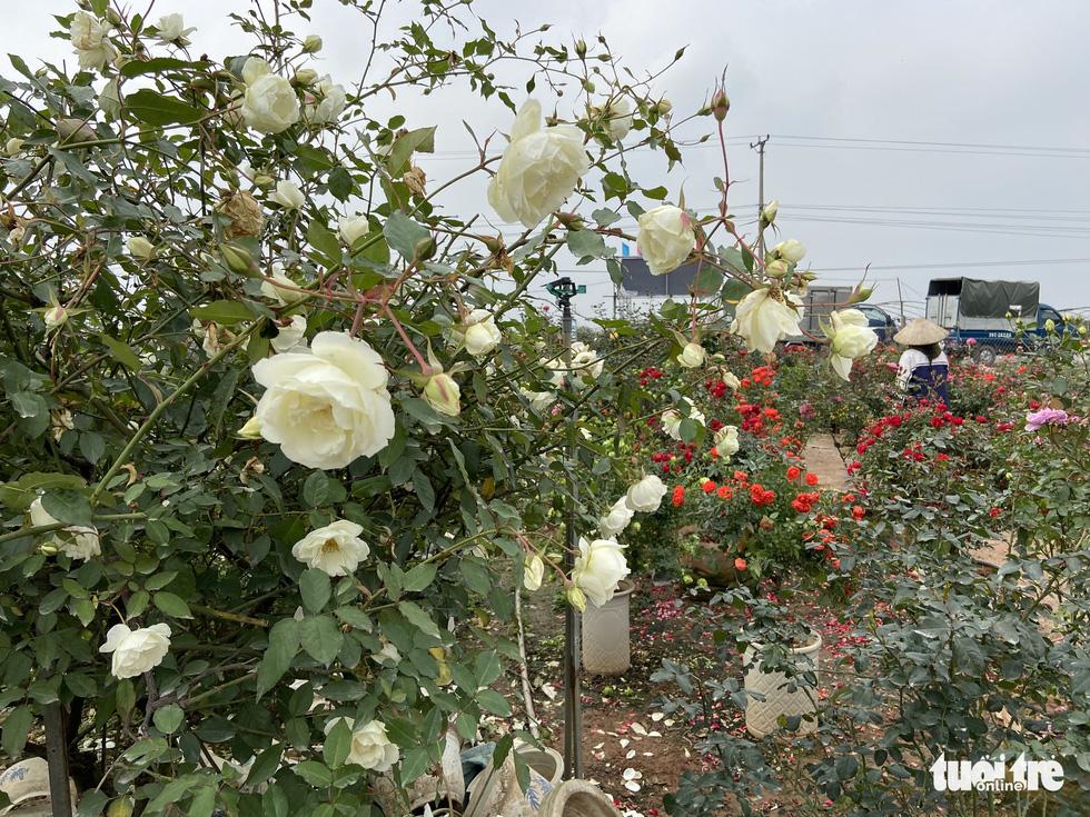 Tấp nập buôn bán, làng trồng hoa Hạ Lôi gỡ gạc sau lần bị phong tỏa - Ảnh 2.