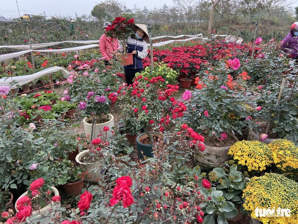 Tấp nập buôn bán, làng trồng hoa Hạ Lôi gỡ gạc sau lần bị phong tỏa - Ảnh 3.