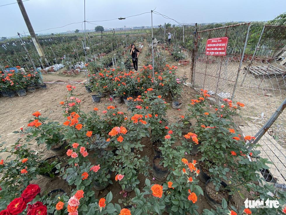 Tấp nập buôn bán, làng trồng hoa Hạ Lôi gỡ gạc sau lần bị phong tỏa - Ảnh 4.