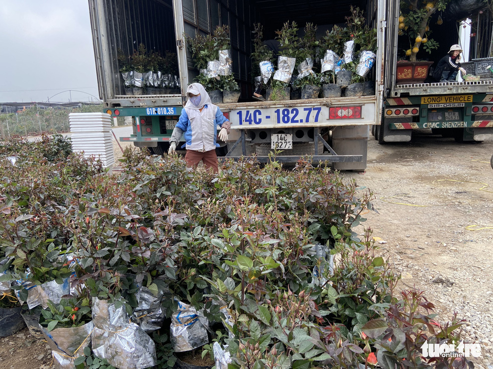 Tấp nập buôn bán, làng trồng hoa Hạ Lôi gỡ gạc sau lần bị phong tỏa - Ảnh 6.
