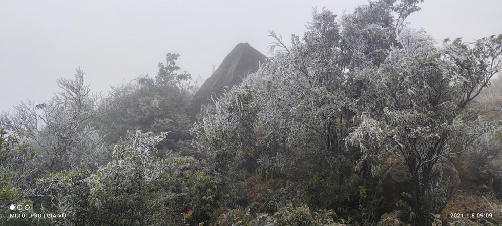 Băng giá phủ trắng cây cỏ trên đỉnh Cao Ly tại Quảng Ninh - Ảnh 2.
