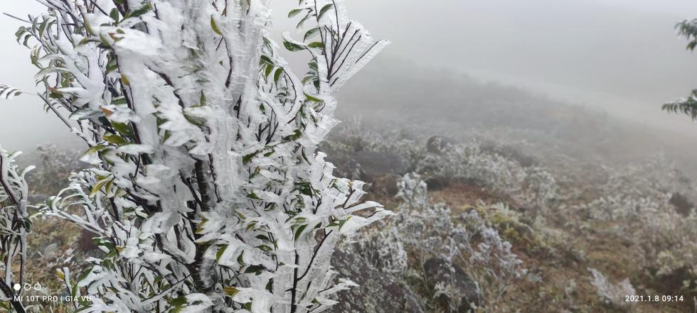 Băng giá phủ trắng cây cỏ trên đỉnh Cao Ly tại Quảng Ninh - Ảnh 6.