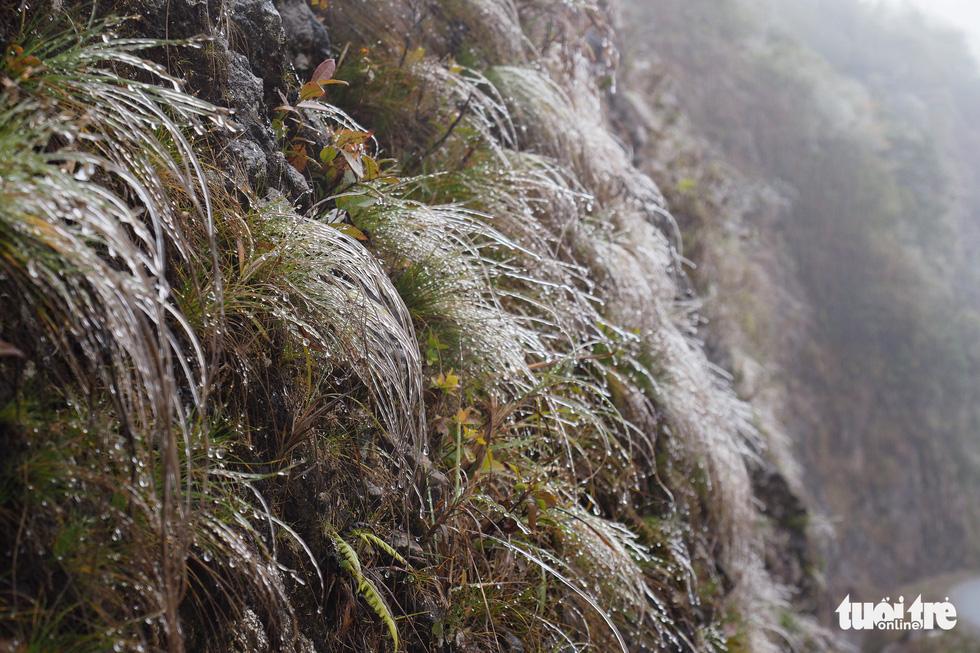 Du khách nườm nượp lên đỉnh đèo Ô Quy Hồ chụp ảnh băng giá - Ảnh 3.