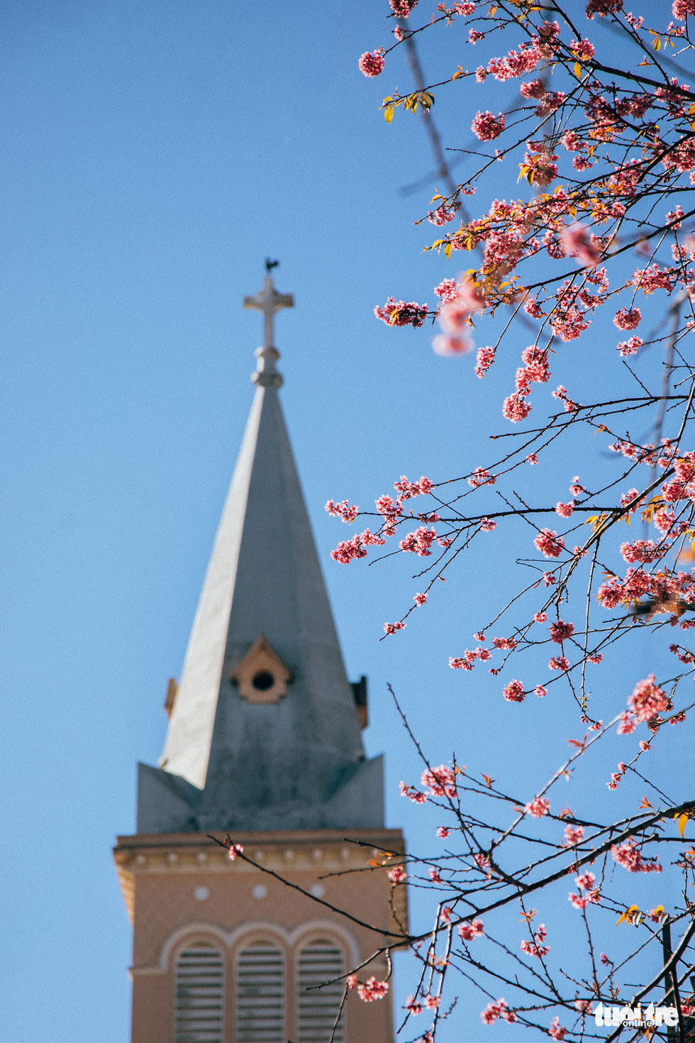 On Tet 29, the cherry blossoms dyed the city of sad pink - Photo 4.