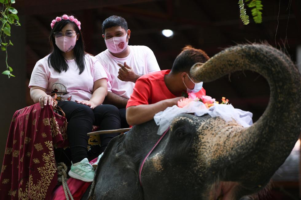 52 cặp đôi Thái làm đám cưới trên lưng voi vào ngày Lễ tình nhân - Ảnh 3.