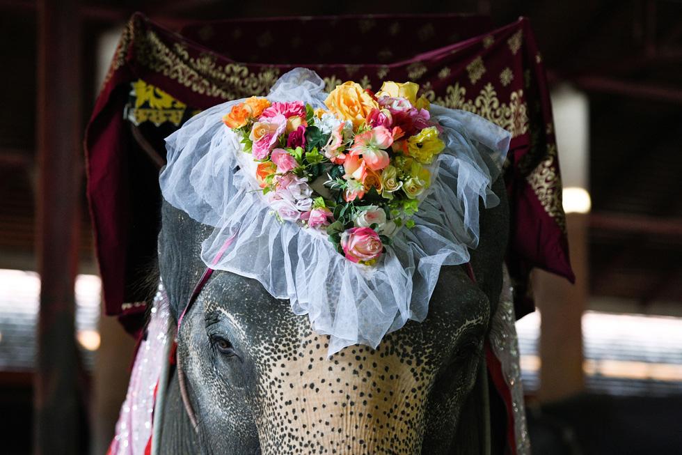 52 cặp đôi Thái làm đám cưới trên lưng voi vào ngày Lễ tình nhân - Ảnh 5.