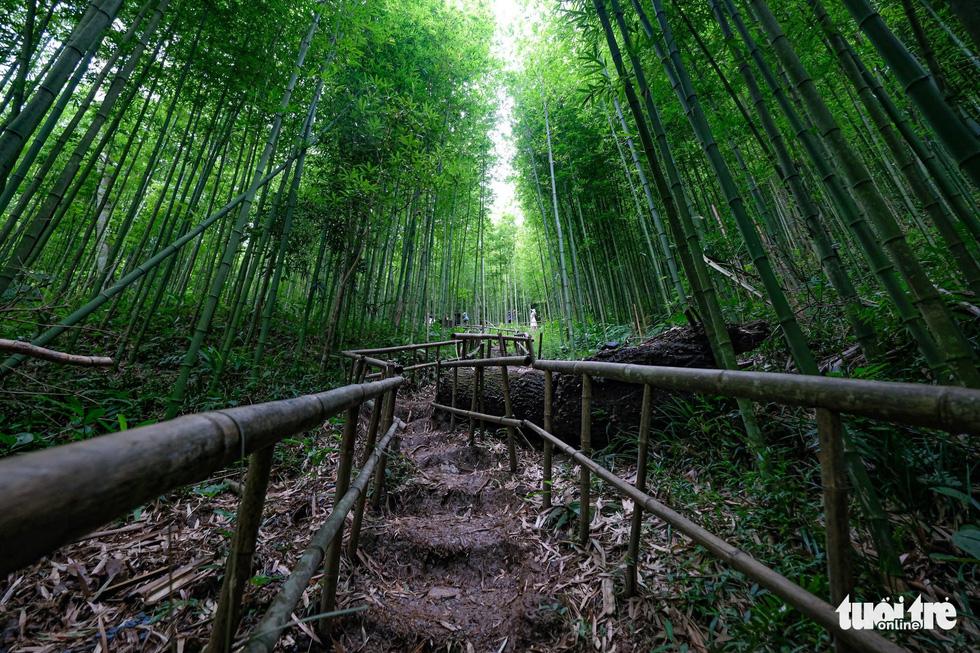 Giữ rừng trúc hoang sơ như tiên cảnh, đón du khách để đổi đời dân bản - Ảnh 7.