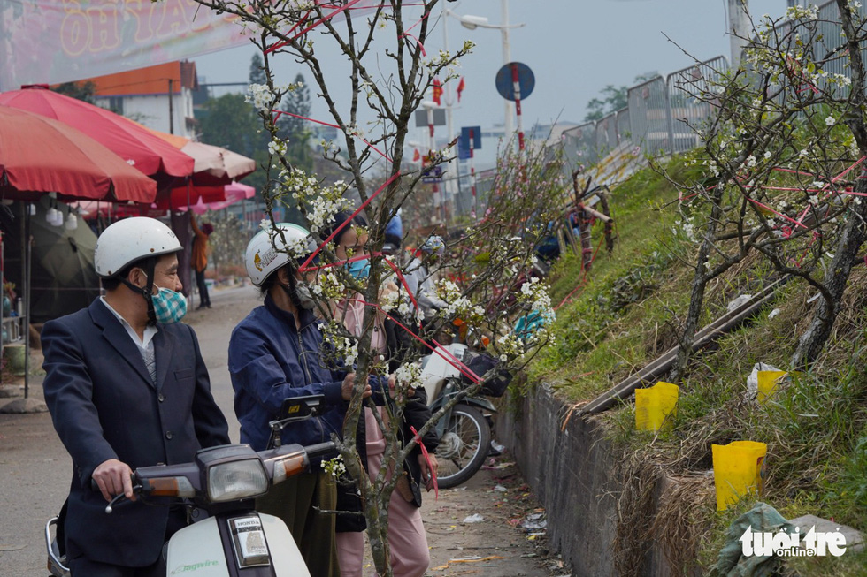 Ngẩn ngơ ngắm hoa lê trắng muốt xuống phố Hà thành - Ảnh 2.