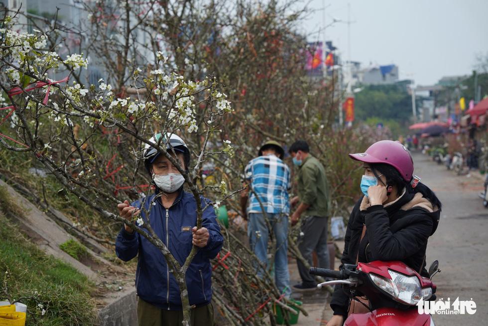 Ngẩn ngơ ngắm hoa lê trắng muốt xuống phố Hà thành - Ảnh 4.