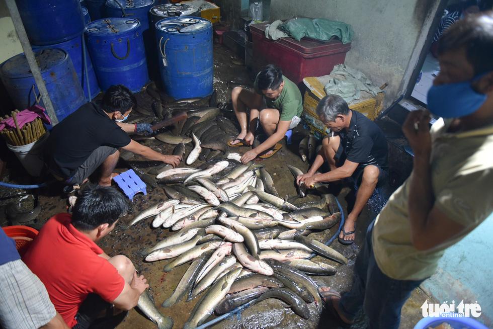Nửa đêm người dân đi mua cá lóc để vía Thần Tài - Ảnh 2.