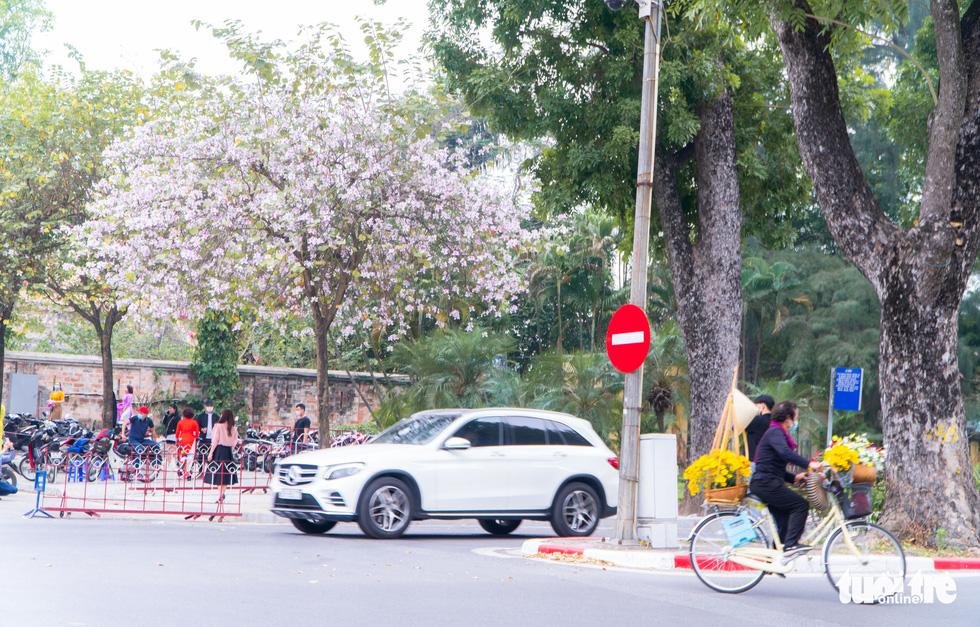 Ngắm hoa ban nở rực rỡ trên đường phố thủ đô - Ảnh 8.