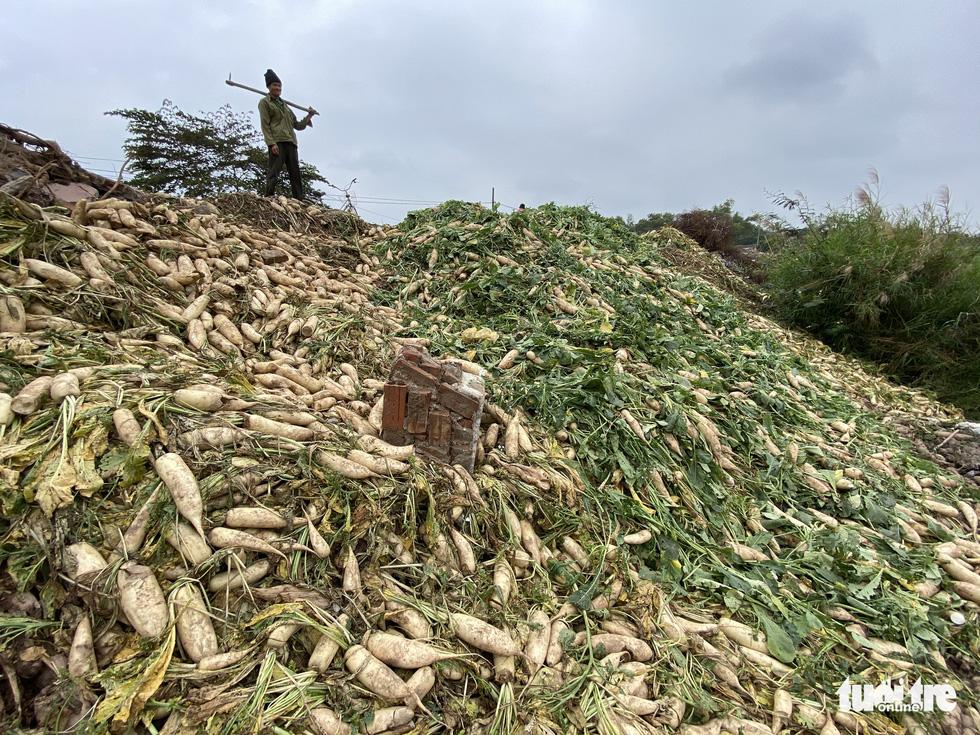 Bán không ai mua, nông dân chở cả ôtô rau đổ xuống sông Hồng - Ảnh 1.