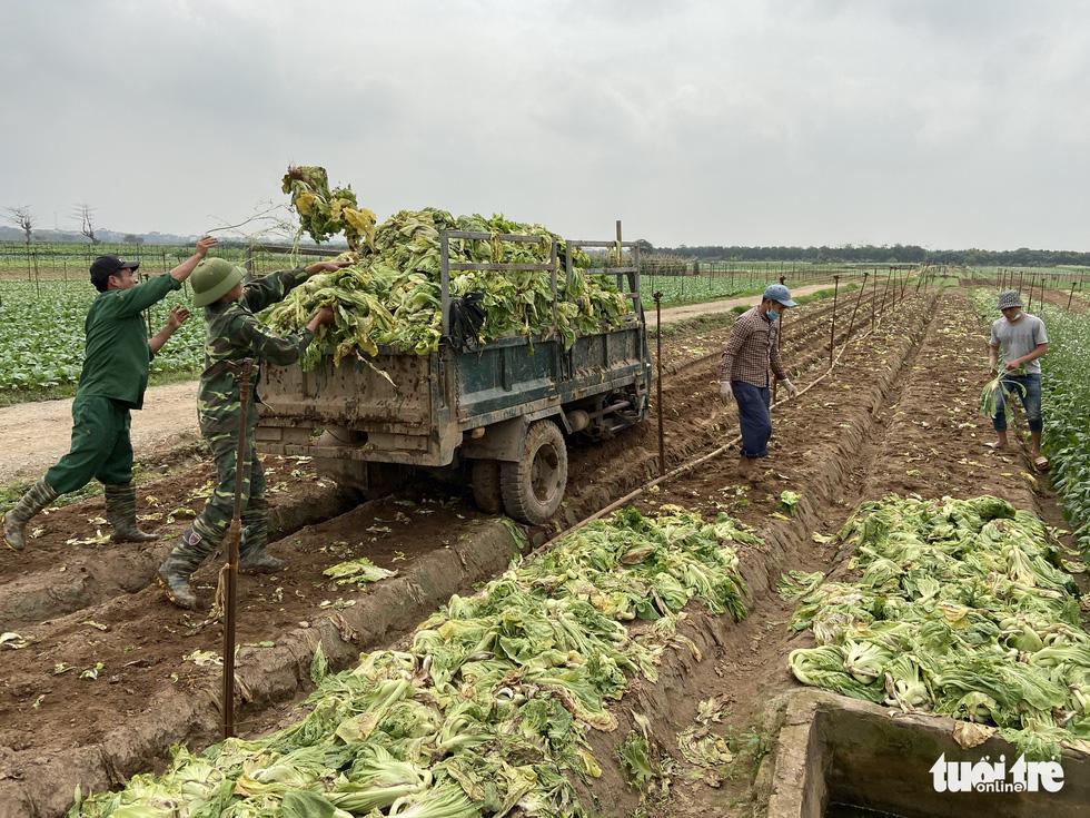 Bán không ai mua, nông dân chở cả ôtô rau đổ xuống sông Hồng - Ảnh 11.